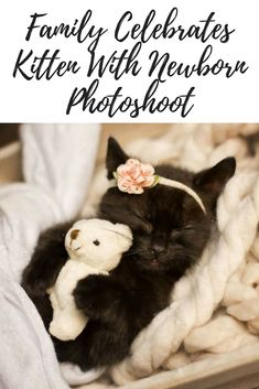 There's nothing better in a family than the excitement of bringing home a new bundle of joy…especially when it's an adorable kitten! #kittens #photography