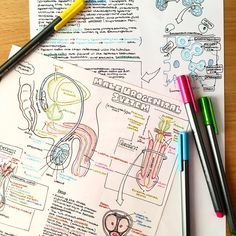 Some urology anatomy revision on my urology attachment!  #medschool #medstudent…