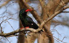 Kwazulu Natal, Game Reserve, South Africa, Bird, Green, Animals, Facebook, Animales, Animaux