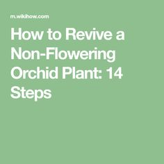 How to Revive a Non‐Flowering Orchid Plant: 14 Steps