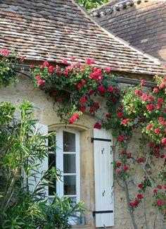 Malgré le charme qu'elles apportent, les végétations dégradent les façades des maisons !