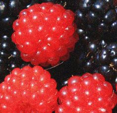 Salmonberry Flowers Nature, Wild Flowers, Kodiak Island, Environmental News, Veganism, Good Old, Raw Food Recipes, Cheating, Reuse