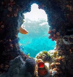 What a view ! #LonelyPlanet writer @gbloom4 is currently on the road... or should we say under water off Culion Island in the Calamian Group of islands in the Philippine province of Palawan. In this photo he is peering through one of the port holes of the Sunken Barge Coron. Culion Island one of the largest in the Calamian group has excellent snorkelling around Dynamite Point on the northeastern tip. Malcapuya Island about halfway down off the eastern side has a nice beach; nearby Banana…