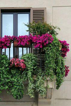 10 pomysłów na niezwykłe kompozycje kwiatowe na balkon