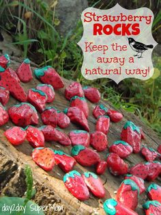 Strawberry Rocks, Fool the birds and Look awesome!