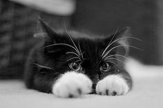 black cat, white paws.