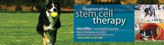 Vet-Stem Cell Therapy: Arthritis in Dogs & Cats | Tendons, Ligaments & Joints in Horses