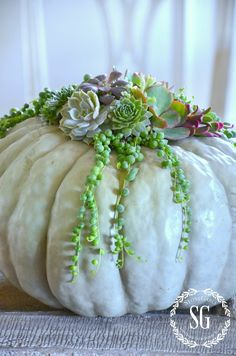 Succulent topped white pumpkin planted into the top. No cutting into pumpkin Autumn Decorating, Pumpkin Decorating, Decorating Ideas, White Pumpkins, Fall Pumpkins, Carved Pumpkins, Painted Pumpkins, Autumn Garden, Autumn Home