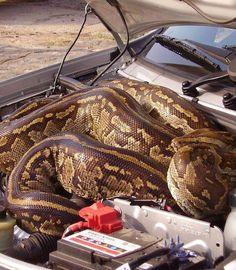 Engine python.