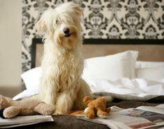 Hjärngympa för hunden - tips