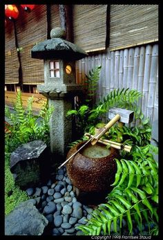idea for corner with japanese maple  This for the fernery?  Some lucky bamboo?  A bonsai?