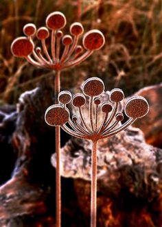 Cow Parsley garden sculptures on a cold and frosty morning.