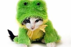 Pet Costume Style: How Should They Look?  - The future of pet parenting is already here = visit Pet360.com today!