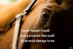 Horse Quote.