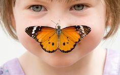 Georgia Ball Keely (4) holds still as a Danaus chrysippus or 'plain tiger' butterfly lands on her nose at the Natural History Museum in London. Hundreds of live tropical butterflies will fill the butterfly house for the returning exhibition called 'Sensational Butterflies' at the museum from April 2 until September 13.