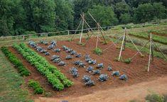 Curso de hortas orgânicas