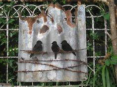 Tin Birds on wire & rusty corrugated iron