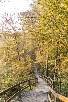 Albisgrat-Höhenweg: schöne Wanderung vom Uetliberg zum Albispass