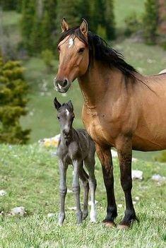 black beauty fenner carol sewell anna