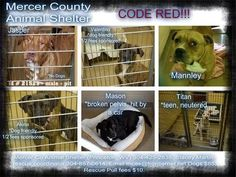 ***CODE RED*** THESE DOGS ARE AT MERCER COUNTY ANIMAL SHELTER IN PRINCETON, WV. THE SHELTER IS OPEN MONDAY THRU SATURDAY 12 NOON-6 PM EST. PLEASE CALL (304) 425-2838 OR (304) 425-2880 RESCUES, CALL STACEY MARTIN, RESCUE COORDINATOR AT (304) 887-0614