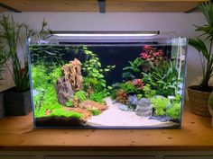 A place for aquatic flora and fauna enthusiasts! Whether you have a question to ask or a planted tank to show off, this is the place. Aquarium Guppy, Goldfish Aquarium, Tropical Fish Aquarium, Tropical Fish Tanks, Aquarium Fish Tank, Aquarium Aquascape, Klein Aquarium, Aquarium Garden, Aquarium Landscape