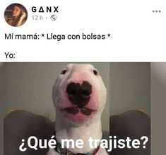 Memes Estúpidos, Funny Video Memes, Funny Relatable Memes, Best Memes, Funny Spanish Memes, Spanish Humor, Rawr Xd, Dark Memes, Stranger Things Netflix