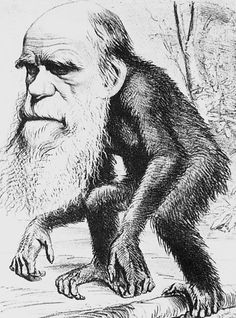 After the uproar about Charles darwin's book, The Origin of Species, artist began creating cartoons comparing him to apes. This is due to the fact that Charles Darwin mentioned how humans and apes come from a common species. Charles Darwin, Robert Darwin, Darwin Evolution, Theory Of Evolution, Human Evolution, Darwin Theory, Origin Of Species, Anthropologie, Natural Selection