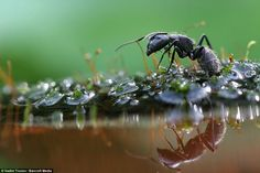 Caught in a downpour:stunning pictures show how the insect world copes with wet weather | Daily Mail Online