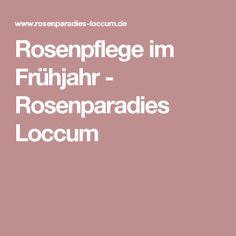 Rosenpflege im Frühjahr - Rosenparadies Loccum