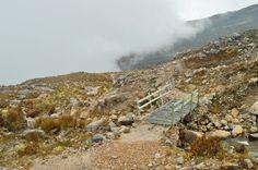 El Cocuy National Park Hiking Frailejones