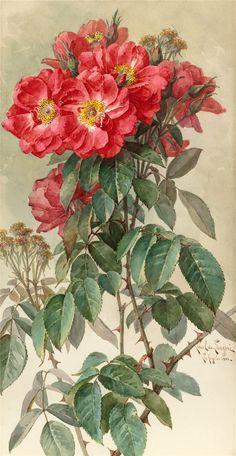 Paul de Longpré (French/American, 1855 - 1911) ~ Roses, 1903