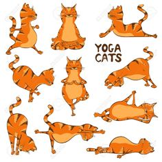 Funny Red Cat Doing Yoga Position. by Annykos Set of isolated cartoon funny red cats icons doing yoga position. Illustration Photo, Illustrations, Pintura Yoga, Yoga Gato, Funny Cartoons, Funny Cats, Animal Yoga, Animal Gato, Yoga Images