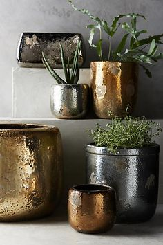 Metallic Crackle Herb Pot #anthrofave #anthroregistry