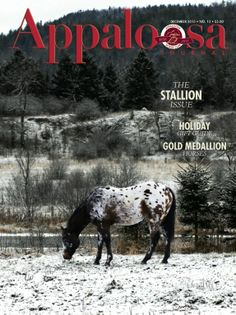 Merry Christmas from the Appaloosa Journal!  In this issue: • Stallions, Stallions, Stallions! • Holiday Gift Guide (http://www.appaloosajournal.com/2013/11/appaloosa-journal-2013-holiday-gift-guide/) • Gold Medallion Horses  • Out & About  Cover Photo: Diversified Money in the snow. Photo by Tammy McGarry.