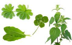Luonnonkasvit, joita voit kerätä ja syödä Plant Leaves, Plants, Plant, Planets