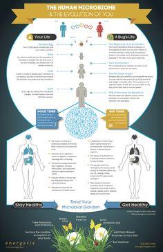 interaction microbe-person evolution