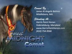 Forest Midnight Comet - APHA Stallion - YouTube