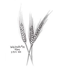 """A black and white sketch of wheat for the topic """"fibre"""". This drawing is part of…"""