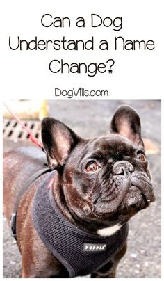 Can a dog understand a name change? Read our tips before you swap out Fido's name for something else! Basic Dog Training, Dog Training Classes, Agility Training, Dog Agility, Training Equipment, Dog Minding, Easiest Dogs To Train, Dog Anxiety, Aggressive Dog