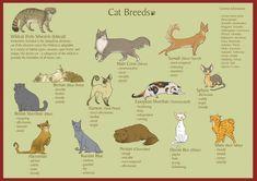 Breeds of Cats by KleXchen.deviantart.com on @deviantART