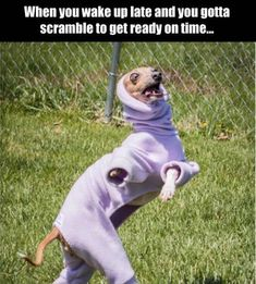 636 best funny dog pictures images on pinterest in 2018 hilarious
