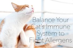 Raw Cat Food Immune System