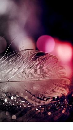 Feather Wallpaper S Mobile Android Original Iphone 7 Wallpapers