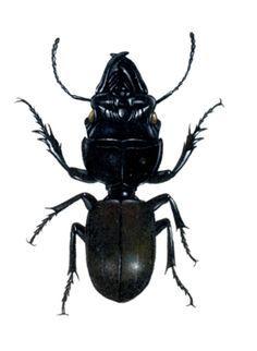 Resultado de imaxes para insects