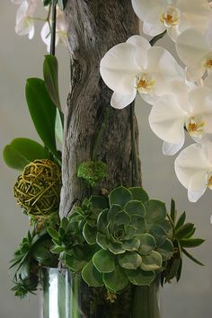 Driftwood arrangement: orchids and succulents with driftwood Air Plants, Indoor Plants, Decoration Buffet, Bouquet Champetre, Sogetsu Ikebana, Orchid Arrangements, Flower Arrangement, Paludarium, Cactus Y Suculentas