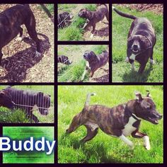 Buddy will be gone today if a rescue cannot take him :'( please share to find him a rescue :) #safeandsound #rescue #rescuedog #dontshopadopt #dog #newlife #happy #love #givesomuch #giveadogachance #somanyneedanewhome #adoption #pet #beautiful #bestfriend #mansbestfriend www.safe-and-sound.org