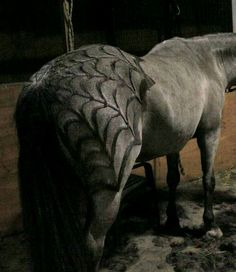 Horse clipping patterns Horse Braiding, Horse Costumes, Halloween Costumes For Horses, Pretty Horses, Horse Love, Beautiful Horses, Animals Beautiful, Leckerli, Horse Stuff