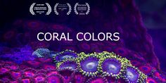 """CORAL COLORS arises from the need to create a timelapse video, which is the technique I mastered, but it was new or rarely seen."" Antonio Rodríguez Canto of myLapse used over 25,000 images of various corals taken over the course of a year, stitching them together to show movement. The idea was to experiment with a new technique, while drawing attention to an urgent issue."