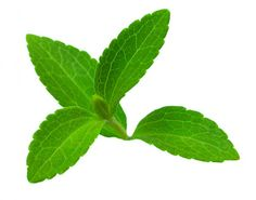 "This Herb Will Help You Quit Smoking ! Stevia, a healing herb, ""kills"" the need for nicotine and also melts pounds, and the best about it is that you can cultivate it in your home. Stevia not only reduces high blood pressure and cures throat inflammation, it is also a good ally in the fight against chronic fatigue - You can consume Stevia in any form you like – powder, juice or tea."