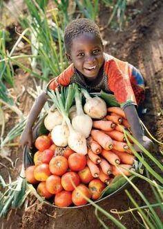 Harvest (oogst tijd) Afrika in siërra Leonne